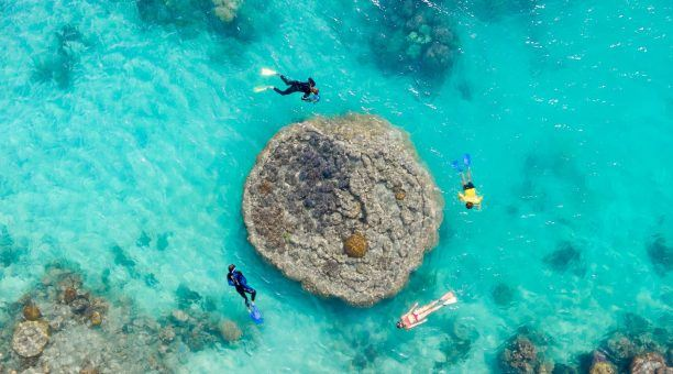 Snorkel at one of the 74 exclusive Reef locations