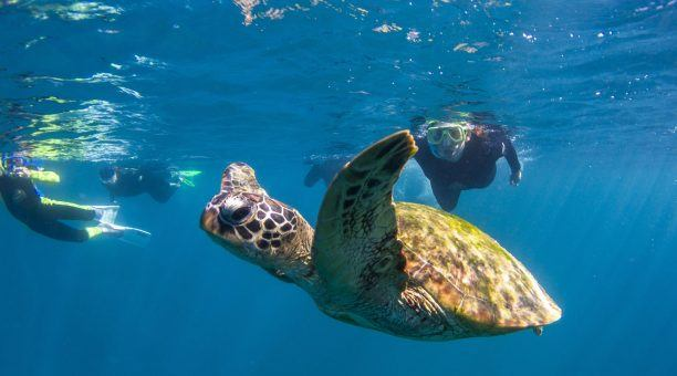Get up close to Turtles!