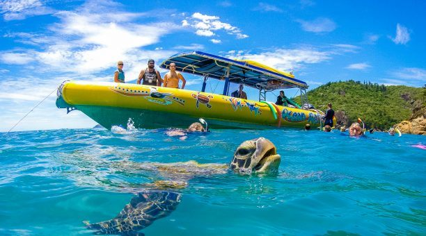 Get up close to the local wildlife like Turtles!